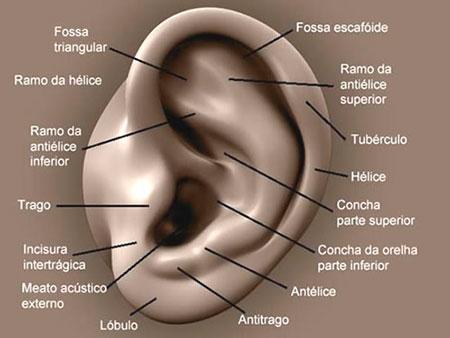 anatomia-orelha